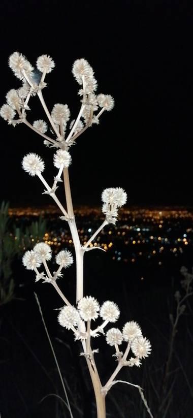 2d.agustin.promo21clase.compu en Hamelin: Flora, Un hermoso paisaje en. Mirador de Bolivia, mostrando las luces que muestra la ciudad de Cochabamba #mirar...