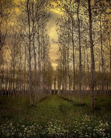 Justi en Hamelin: Paisaje  (Sils), Bosques de primavera!!!!🌲🌻🌲🌻