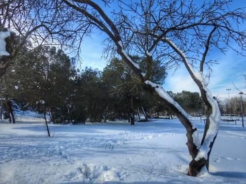 María G Terrones en Hamelin: Flora  (Móstoles), Árboles caducos llenos de nieve al sur de Madrid #invierno20