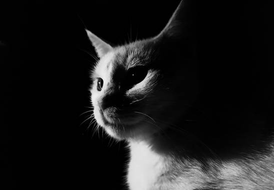 Michael_vinasco en Hamelin: Fauna  (Ansermanuevo), #fauna Los antiguos egipcios habrían sido los primeros en domesticar gatos, hace ya 4.000 años. Probable...