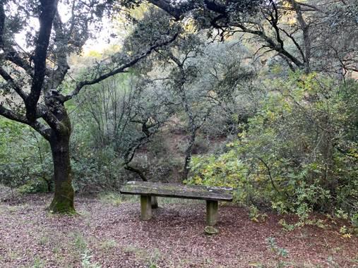 Manubarbecho en Hamelin: Paisaje  (Córdoba), #ParquesyJardines      Parque Forestal Los Villares (Córdoba)