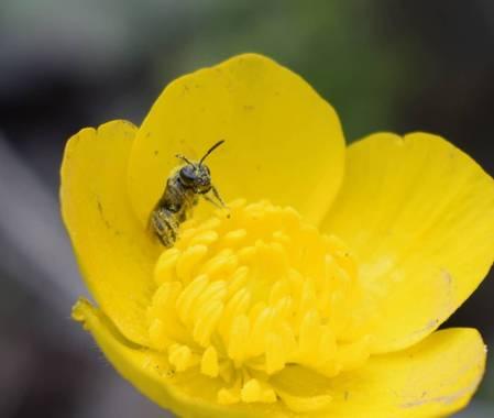 Reich  en Hamelin: Flora  (Aldeire), #flora21