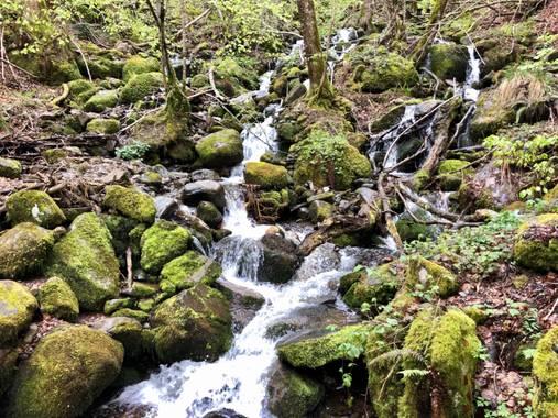 Naturalezadebarrio en Hamelin: Paisaje  (Bausen), Bosque encantado de Carlac#plantaunarbol#naturalezadebarrio#hayas#carlac#bausen