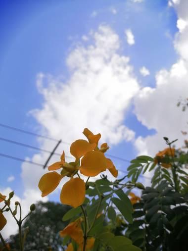 Kenyjimenez9 en Hamelin: Flora  (San Pelayo)