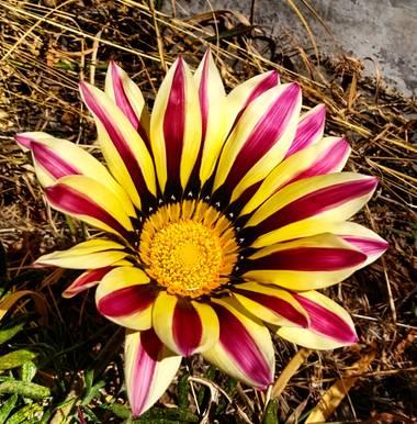 alincithask8.hdezglez en Hamelin: Flora, 🤩