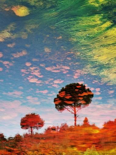Mararuizasensio en Hamelin: Paisaje  (La Palma del Condado), #flora21 #arboles #algas #riotinto #huelva #rio #andalucia #riorojo #flora