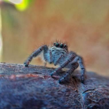 Cecilia82logiurato en Hamelin: Fauna, Araña
