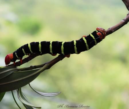 Xiomara Rovira  en Hamelin: Fauna  (Gigante), #photography #naturalezacolombia