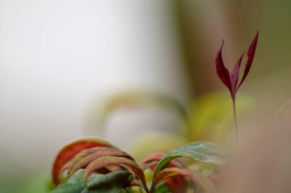 Azulmarino  en Hamelin: Flora  (Viver i Serrateix), El otro gran Mundo #naturaleza #frommypointofview #observa #composicion #naturephotography