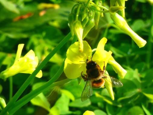 Miguelacuario36 en Hamelin: Fauna  (Conil de la Frontera), #abeja