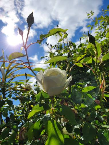 Patosantander16 en Hamelin: Flora, #NATURALEZA #pictures #fotografia #saturday