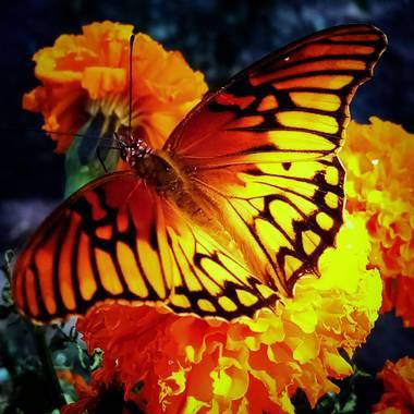 Navarroarevalomariateresa en Hamelin: Fauna  (Viesca), Hermosa mariposa!!!!