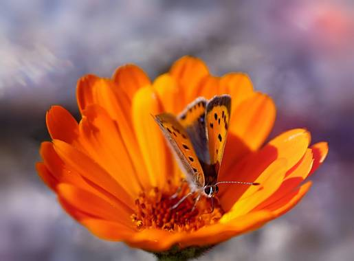 rqsalcedo en Hamelin: Fauna  (Majadahonda), #mariposas