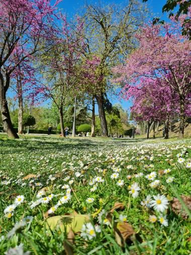 Liliannetnavas en Hamelin: Paisaje  (Zaragoza), Green 🍀  #flora21