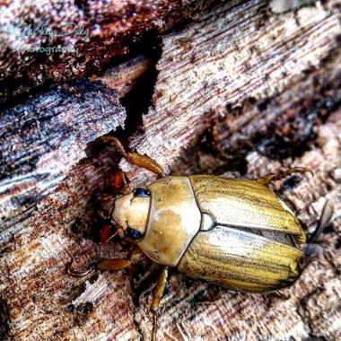 dalygordillo17 en Hamelin: Fauna, Recicladores de nutrientes #fauna
