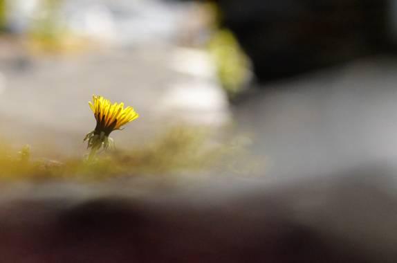 Azulmarino  en Hamelin: Flora  (Planoles), Desde mi punto de vista #floramarilla #frommypointofview #naturaleza #flor #naturephotography