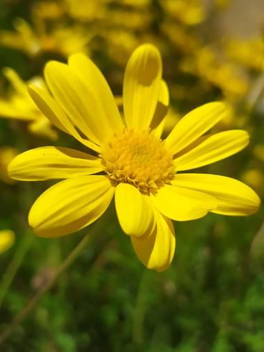 Mcjarama en Hamelin: Flora  (Benidorm), #flora21