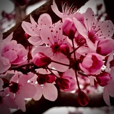 Sayurigion en Hamelin: Flora