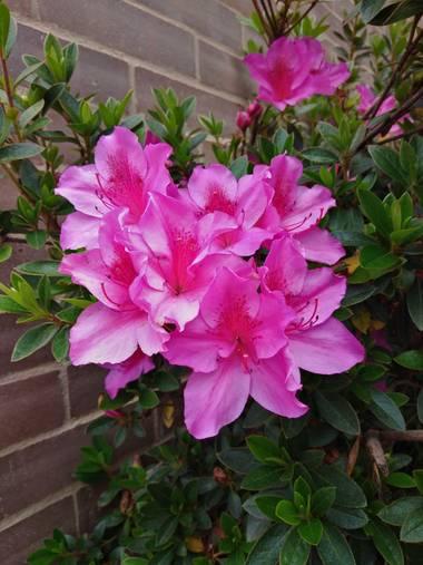 Beth.stalhuth en Hamelin: Flora  (Tunja), Este hermoso ramillete amo estás flores. #flora #Rosadas #BellezaNatural