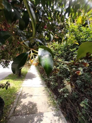 Zaynab en Hamelin: Flora  (Bogotá, D.C.), Sobre el camino de sombras