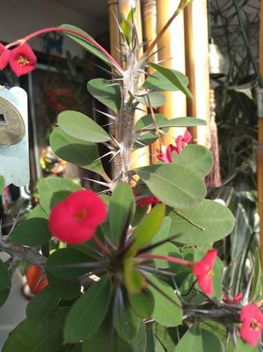 GrachuV. en Hamelin: Flora, Jardín de invierno,sol,flores,plantas🍀🌺🇦🇷