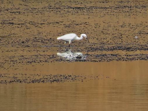 fabiola en Hamelin: Fauna  (Oliva de la Frontera), #pantano