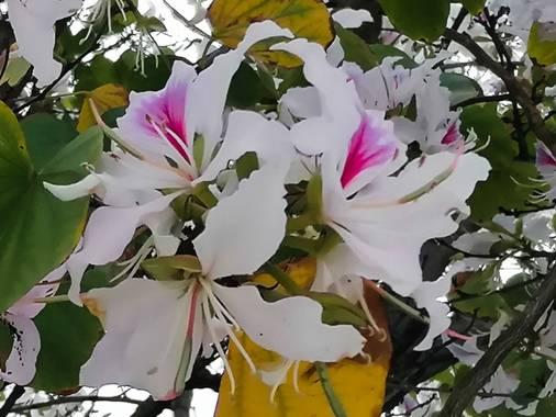 Tamaralorenamunoz en Hamelin: Flora  (Benalmádena), #flora21 #andalucia #malaga