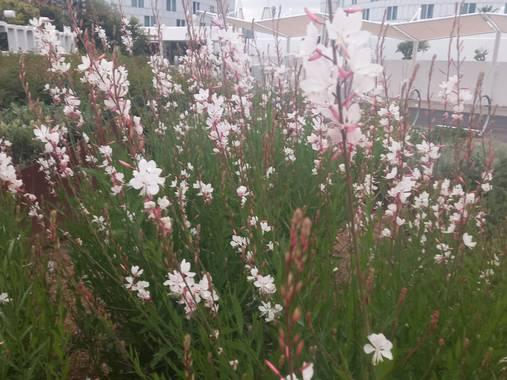 Enrique71as en Hamelin: Flora, Blanco y Verde