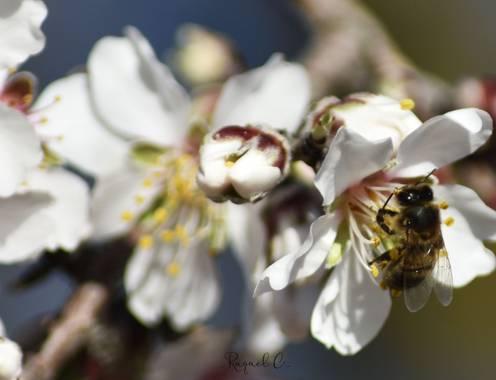 Rakel.536 en Hamelin: Flora, Naturaleza 🐝🌸