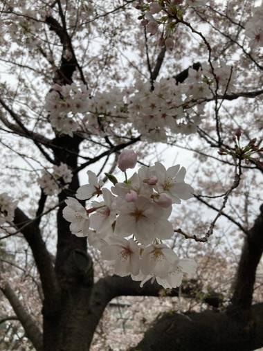 iambutterflyspirit en Hamelin: Flora  (Japan), Beautiful by Tokyo