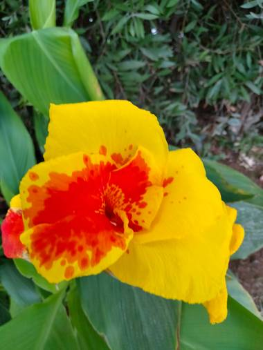 Solerantonio2 en Hamelin: Flora  (Pechina), Bonita flor