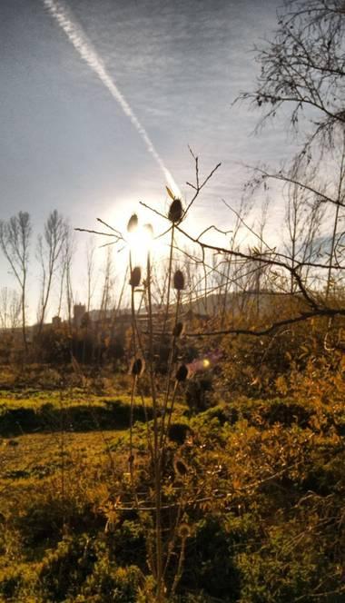 Teo en Hamelin: Paisaje  (Villamuriel de Cerrato), #atardecer#otoño#castilla