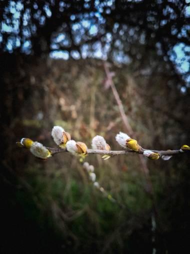 Marijohz en Hamelin: Flora  (Ezcaray), Anuncian primavera