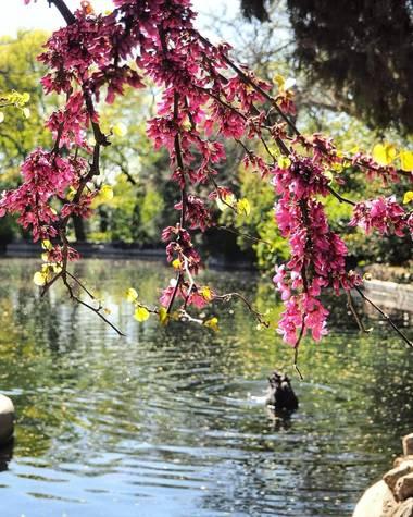Beasaoton en Hamelin: Paisaje  (Madrid), Lago del parque El Capricho 🦆  #parquesyjardines #parqueelcapricho #madrid #pato #fauna #flora #paisaje #lago