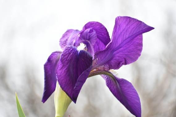 Belenhernandezg en Hamelin: Flora  (Soto del Real),,#flor #primaveraconaromafresias