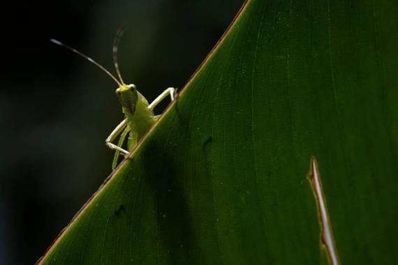 posadaemilio93 en Hamelin: Fauna  (Ricaurte), #macrophotography #naturephotography