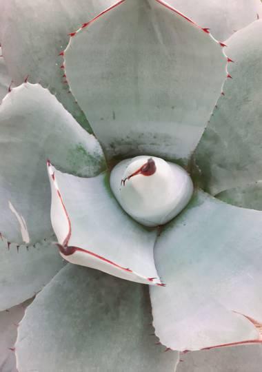 pbebo en Hamelin: Flora  (Valencia), #planta #otoño #suculenta #paruqesyjardines #comunitat_valenciana