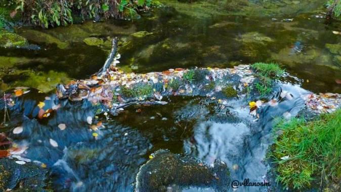 vllmiguel en Hamelin: Flora  (Valdepiélago), #otoño #leon #valdepielago #coladecaballo #montaña #coloresdeotoño  #agua @vllmiguel @vllanosm #otono20 #paisa...