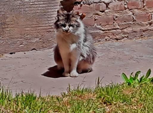 Gabriela Analía Russo en Hamelin: Fauna, #gatoscallejeros #pueblo Mechongué