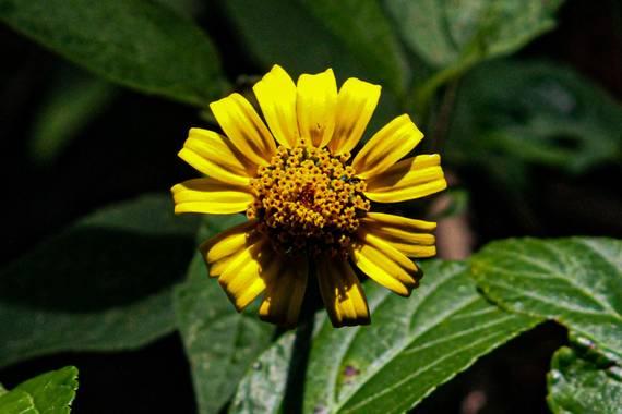Franciss RNR  en Hamelin: Flora  (Pimampiro), #Flora 21