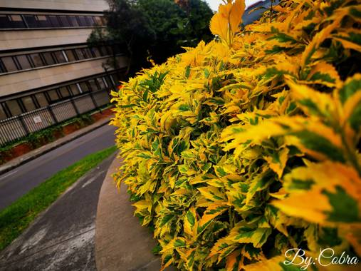 Jefersongodoy.18 en Hamelin: Flora  (Engativá), #hermosaflora