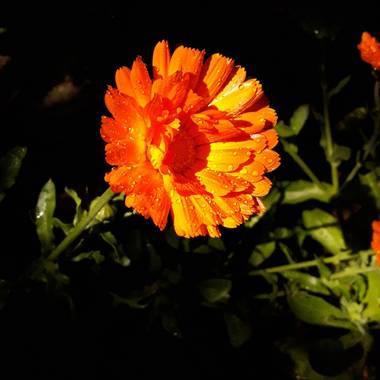 manuelbustingorry en Hamelin: Flora  (San Martín de los Andes), Que bien les queda el sol de la mañana a las flores de la plaza ! #flora21