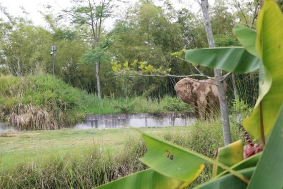 Ariaslorena89 en Hamelin: Fauna  (Pereira), #elefante