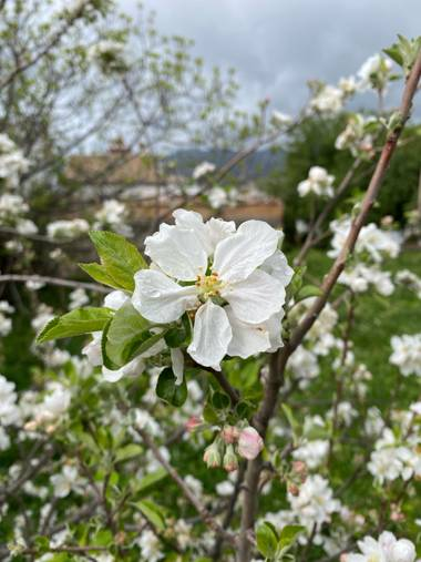 jacob86.rt en Hamelin: Flora  (Benaocaz), Flor iluminando Benahocaz