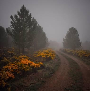 Luisleonrodriguez en Hamelin: Paisaje  (Pomer), #paisaje#Niebla