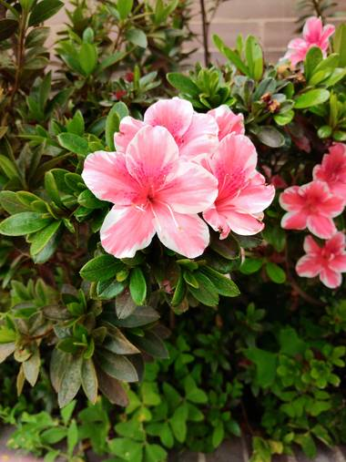 Beth.stalhuth en Hamelin: Flora  (Tunja), En dos colores 🌸 #flora