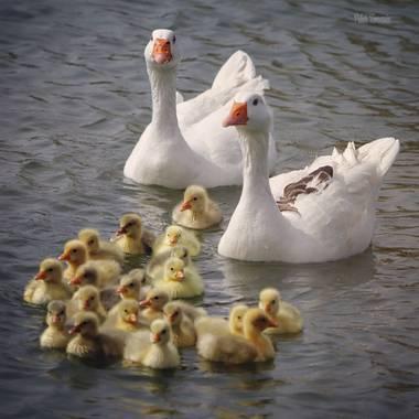 Yatoma66 en Hamelin: Fauna  (Leganés), La familia es lo mejor!