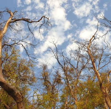 S.- en Hamelin: Flora  (Valencia), #Espectacular #Luz #Árboles #Cielo #Fotógrafa #Fotografía2021 #flora21 #Paisajes