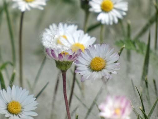 mariale en Hamelin: Flora, 📸 #marialemdza  #chopo #PelusaDeChopo #BellezaNatural #FloresSilvestres Provincia de Zamora, primavera 2021.