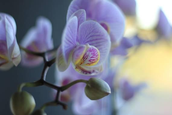 Sandra.floresp23 en Hamelin: Flora  (Quijorna), #flora